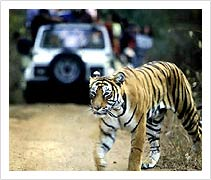 Corbett National Park in Uttarakhand